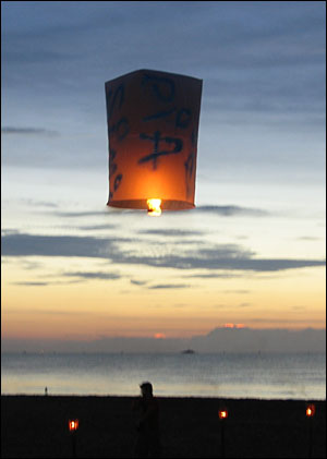 Rispapperslampa, Khao Lak annandagen. Bild: Ylva Norberg, RSOS